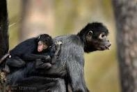 Word origin monkeys fist supply